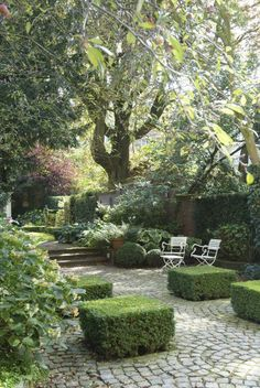 courtyard full of beautiful boxwoods and other lush plantings...
