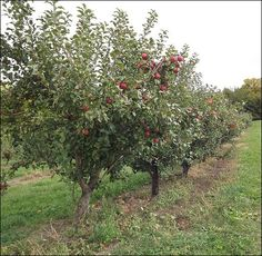 """""""Planning the Homestead Orchard"""" by Ed Mashburn"""