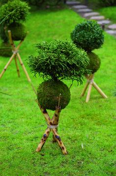Unique Kokedama Ball Ideas for Hanging Garden Plants ball Moss Garden, Diy Garden, Garden Projects, Garden Art, Garden Plants, String Garden, Ikebana, Container Plants, Container Gardening