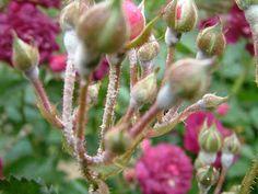 Blog, Garden Ideas, Gardening, Decor, Naturaleza, Plants, Flowers, Photosynthesis, Garden Plants