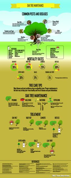 Oak Tree Maintenance Infographic - Keep your trees healthy and learn how to spot and treat common diseases and pests that can harm oaks.