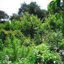 Bosques de alimentos: aumentan la fertilidad y productividad y reducen plagas y enfermedades ecoagricultor.com