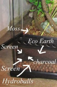 crested gecko habitat plants - Google Search