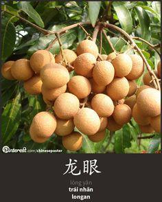 龙眼 - lóng yǎn - trái nhãn - longan