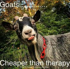 """I don't think that I agree with the """"cheaper than therapy"""" bit, but certainly more productive : )"""