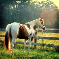 Horse Picture, Animal Photography, Brown, White, Pinto, Equine, Summer Photo- 5x5 inch Print, Animal Photography - Flare. $15.00, via Etsy.