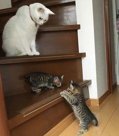 保護された2匹の子猫。保護先で愛情いっぱいの猫に出会うと…