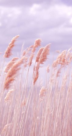 Dreamy Pastel Beach Grass is part of Trendy wallpaper Pink Poppy Photography is all about sharing love, peace and happiness through free creative commons licensed imagery Please help by spreading - Poppy Photography, Nature Photography, Aesthetic Photography Pastel, Photography Flowers, Morning Photography, Fashion Photography, Dreamy Photography, Summer Photography, Pink Wallpaper Iphone