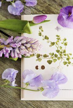 Flowers - lathyrus, hyacinthus, tulipa