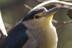 高解像度:鳥 - Y Ena - Picasa ウェブ アルバム