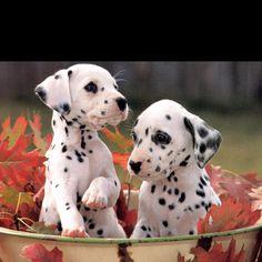Spots. =]