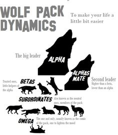 Just to make your life a little bit easier, I made this pretty quickly for everyone that's interested about wolf pack dynamics at all. Some people might have different opinions about this, but this... Puppies, Calligraphy, Movie Posters, Movies, Character, Puppy Love, Art, Boy Scouts, Whoville Hair