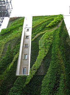 THE GREEN GUERILLA COLLECTION | SPRING 2013  FEATURED VERTICAL GARDENER | Patrick Blanc (vertical garden)