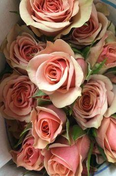"""""""Ilse"""" Spray Roses"""