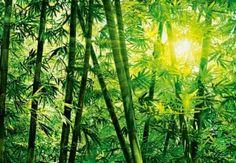 See Bamboo Art Prints at FreeArt. Get Up to 10 Free Bamboo Art Prints! Gallery-Quality Bamboo Art Prints Ship Same Day. Bamboo Image, Bamboo Art, Photo Wallpaper, Of Wallpaper, Wallpaper Jungle, Asian Wallpaper, Panda Habitat, Small Backyard Gardens, Big Garden