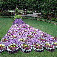 Wondrous Peacock Topiaries#/photo/63478?&_suid=1362517389936007869838391883493
