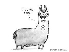 The llama llikes you.