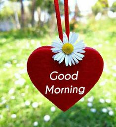 Beautiful good morning images with flowers Good Morning Love Text, Good Morning Beautiful Images, Good Morning Photos, Good Morning Greetings, Good Morning Flowers Rose, Morning Rose, Good Morning Massage, Bon Weekend, Flower Images