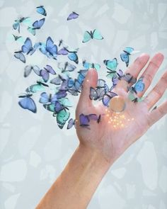 Catcher, Environment, Butterfly, Flowers, Instagram, Royal Icing Flowers, Butterflies, Flower, Florals
