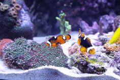 Hobby Aquaristik – oder wie man zu Hause auch entspannen kann #Buntes #Ansaughilfe #Aquarium #Bedienung #biologisch