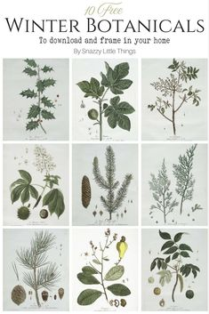 10 FREE French Botanical Prints for Winter