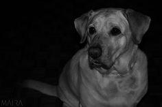 Uma das coisas que eu mais gosto de fotografar por agora são animais, principalmente a minha cachorra Linda, não faltarão fotos dela nesse blog.   O que me faz preferir fotografar animais do que pessoas, é a naturalidade e espontaneidade das fotos, acredito que as redes sociais contribuíram p...