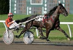 harness racing - Scarborough ME