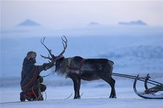 A Raindeer in Lapland. Sweden Cities, Sweden Travel, I Love Winter, Swedish Style, Norse Vikings, Stockholm, Arctic, Finland, Samara