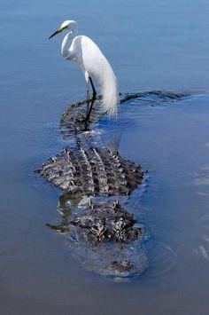 Dream Analysis, Love Spells Call / WhatsApp: +27843769238 Animals And Pets, Funny Animals, Cute Animals, Beautiful Birds, Animals Beautiful, Beautiful Pictures, Animal Kingdom, Everglades National Park, Florida Everglades