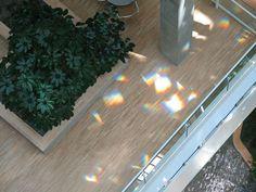 Behnisch Architekten interior shows rainbow prisms.  Sunlight + Glass.