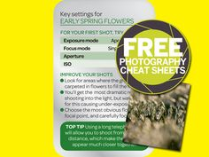 How to photograph early spring flowers (free cheat sheet)