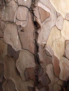 Pretty bark textures