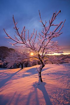 Sunset in the Alps by Urska Majer - a brisk and beautiful cold winter scene!