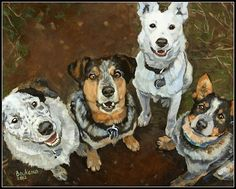 Custom Made A Lunacy Of Cattle Dogs by Dbartworks