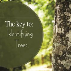 Knowing what kind of tree you have is key for proper tree care. You can always ask someone else, but we will get you started on the road to do it yourself tree id. To learn more, head over to tfsweb.tamu.edu !!