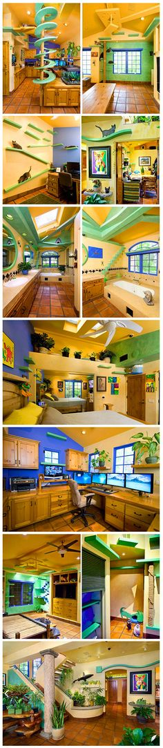 "With the help of construction company Trillium Enterprises, one Californian man upgraded his home into an oasis for his eighteen cats. Located in Goleta, California, the $35,000 renovation transformed the ordinary abode by adding colorful, complementing ledges (or ""catwalks"") all around the house. Every room, from the master bedroom and personal office to the kitchen and bathroom, has playful accommodations for the owner's furry little friends."