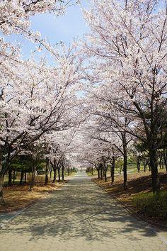 Incheon, Corea del Sur South Korea Seoul, South Korea Travel, Some Beautiful Pictures, Beautiful Places, Places To Travel, Places To Visit, Korea University, Incheon, What A Wonderful World