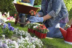 Quem não sonha em ter um belo jardim para chamar de seu? Independentemente do tamanho e das configurações do jardim, o fato é que esses espaços valorizam a decoração do imóvel e enchem de vida qualquer ambiente. Se você, assim como nós, adora um jardim bem florido, confira dicas especiais para decorar essa parte da residência.  http://blog.casashow.com.br/4-dicas-decorar-jardim/#sthash.v7geGplg.dpuf