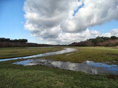 #TEXELPICS (images from the island Texel): Ploeglanderweg