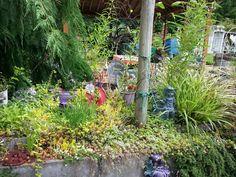 Mawmaw s garden