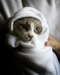 """""""Bish, I know guac is extra."""" @misterkitty_ #purrito  Everything on HussyCats.com is on sale for the holidays!!!"""