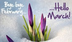 Huge collection of Goodbye February Hello March images with quotes and pictures that you can share o...