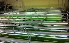 Algae cultivation in gigantic photo-bioreactors at the University of Dayton's Research Institute.