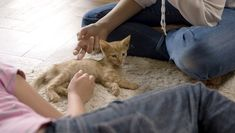 Consider signing up for a kitten kindergarten class where they can polish their social skills with other kittens and people, learn tricks, and practice good behaviors like using a scratching post. Feral Kittens, Cats And Kittens, Golden Cocker Spaniel Puppies, Persian Kittens, Kittens Playing, Cat Facts, Cute Little Animals, Cat Lovers, Funny Animals