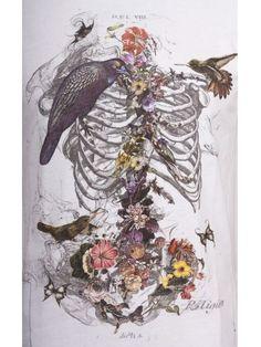 Religion Clothing T Shirt Skeleton Flower in White Skeleton Flower, Skeleton Art, Illustrations, Illustration Art, Gcse Art, Anatomy Art, Art Inspo, Cool Art, Art Projects