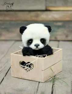 Who want a cute little panda ? ( To be honest I don't think that it is a really panda) Baby Animals Pictures, Cute Animal Pictures, Animals And Pets, Baby Panda Pictures, Animals Kissing, Anime Animals, Animals Images, Farm Animals, Cute Puppies
