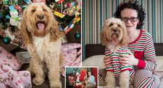 Mum Spends Over £1,000 On Xmas Presents For Dog, Admits She Loves Pup More Than Her Six-Year-Old Son