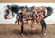 Arabian Costume on model horse by Sue Sudekum