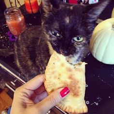 One reason being they actually eat people food. | 27 Things You Discover When You Get A Cat