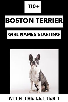 Little Baby Girl, New Baby Girls, Little Babies, Baby Boston Terriers, Boston Terrier Names, Mighty Mighty, Dog Health Care, The Perfect Dog, Letter T